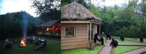 gorilla-forest-camp-bwindi-lodge